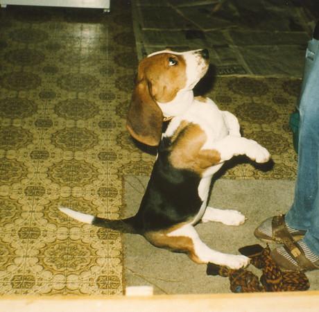As a puppy. Dec 1980